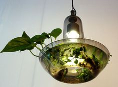 With all recyclable parts, Green Lamp is a three-way win as solar panel power's the the bulb that stimulates the growth of air filtering plants to improve indoor air quality. Led Grow Lights, Solar Lights, Hanging Lights, Air Filtering Plants, Green Lamp, Plant Lighting, Lokal, Lamp Design, Design Lab
