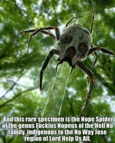 Reminds me of the spider that were everywhere in Zelda Ocarina of time