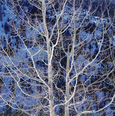 Christopher Burkett, 'Glowing Winter Aspen, Colorado,' 2000, Photography West Gallery