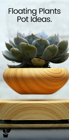 Floating Plants Pot decor for home and ofice. Bonsai Plants, Air Plants, Potted Plants, Cactus Plants, Floating Plants, Surface 2, Little Plants, 5 Seconds, Plant Decor