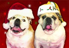 "English Bulldogs Christmas / Holiday Cards ""Happy Holiday Season"" Box of 10 Premium Cards with White Envelopes   A Cause 4 Paws- A small investment w/ a great impact! A Percentage Of Proceeds Go To Animal Rescues! We want to encourage others to make a difference knowing that a donation is made w/ each purchase to help animals."