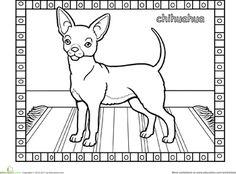 Worksheets: Chihuahua Coloring Page