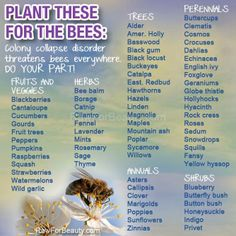 Plants to enhance your bees productivity ...