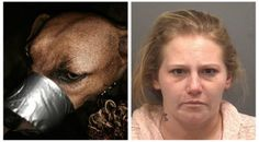SOUTH DAYTONA, Fla. – Police are investigating a Facebook photo showing a dog with its muzzle taped shut after a high-volume of calls were received. Katie Brown of South Daytona uploaded a picture ...