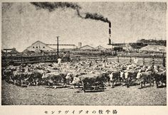 """Cattle Ranch in Montevideo, Uruguay"", Juvenile Encyclopedia, 1932 Vol. 14 World Geography 兒童百科大辭典 第十四巻 地理篇(三) 玉川學園出版部 昭和七年"