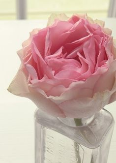 pink simplicity: rose in parfum bottle.