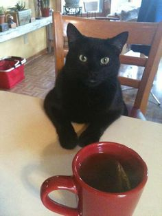 Catladyland: Cats are Funny Black Cats are Bad Luck? What a Bunch of Hooey!