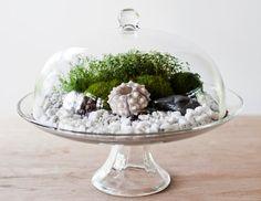 Cupcake stand terrarium cool-home-decor