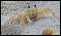 Cangrejo de Mar-Arraial D´Ajuda-Ba-Brasil