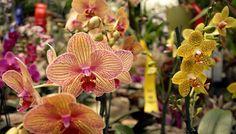 yo escogí esta imagen por que en el Ecuador por la sierra hay muchas orquídeas de diversos colores para mirar ecuador es megadiverso por que tiene mucha flora y fauna en diferentes del país como: en la amazonia, en la sierra, etc.