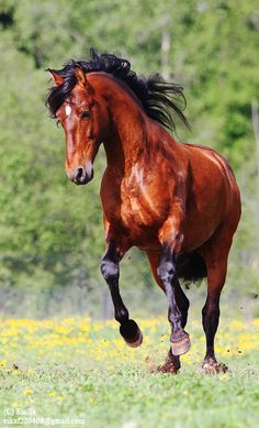Beautiful very red bay horse Most Beautiful Animals, Beautiful Horses, Beautiful Creatures, Beautiful Pictures, Horse Pictures, Animal Pictures, Bay Horse, Majestic Horse, All The Pretty Horses