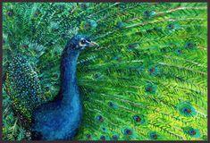 Peacock Peacock Art, Canvas Board, Peacocks, Deviantart, Artist, Artwork, Goodies, Paintings, Sweet Like Candy