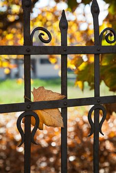 SEASONAL – AUTUMN – at the iron gate, you can almost smell the distinct fall smell and feel the crisp cool air of autumn.