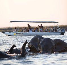 Win A Photo Safari in Botswana