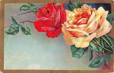 Red & Yellow Roses on 1909 Postcard