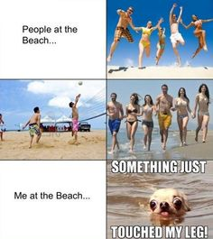 Whenever I Go To The Beach  // funny pictures - funny photos - funny images - funny pics - funny quotes - #lol #humor #funnypictures