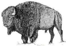 Bison animal graphics