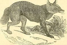 """Image from page 155 of """"The naturalist's library : containing scientific and popular descriptions of man, quadrupeds, birds, fishes, reptiles and insects"""" (1852)   Flickr - Photo Sharing!"""