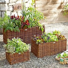 Product Images   Williams-Sonoma; planter;