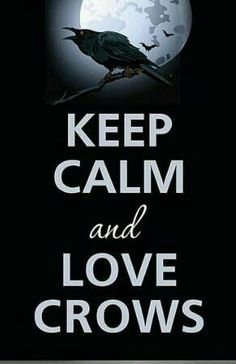 Keep Calm and Love Crows. One for sorrow, Two for joy Three for a girl, Four for a boy Five for silver, Six for gold Seven for a secret never to be told. Crow Art, Raven Art, Crow Or Raven, One For Sorrow, Keep Calm And Love, My Love, Vikings, Quoth The Raven, Six Of Crows