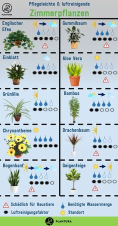Air-cleaning plants: The Top 10 - Plantura - Easy-care & air-purifying houseplants: fine dust, exhaust gases, bad air can create a bad indoor cl - Air Cleaning Plants, Air Plants, Garden Plants, Indoor Plants, House Plants Decor, Plant Decor, Interior Garden, Interior Plants, Garden Care