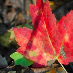 Chance of Thunderstorms in New Milford: Weekend Fall-Like Weather Forecast