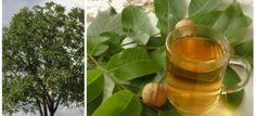 Čaj z ořechového listu vám změní život: 21 léčivých účinků, které by měl znát úplně každý! Moscow Mule Mugs, Tableware, Food, Recipes, Dinnerware, Tablewares, Rezepte, Meals, Ripped Recipes
