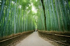 The Arashiyama Bamboo Grove is one of Kyoto's top sights and for good reason: standing amid these soaring stalks of bamboo is like being in another world.