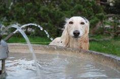 Please don't splash.