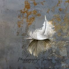 Aerobatics, Square photo, Feather falling on the ground, Shades of White and blue-gray, Print on Wat Painting & Drawing, Watercolor Paintings, Watercolor Paper, Bild Gold, Gold Leaf Art, Encaustic Art, Bird Art, Art Lessons, Flower Art