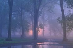 EvidencE even in the quietest moments lV Beautiful Places, Beautiful Pictures, Misty Forest, Tree Artwork, Fantasy Forest, Quiet Moments, Tumblr, Art Music, Mists