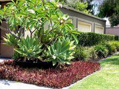 carré de plantes vivaces couvre sol pourpre au pied d'un arbre