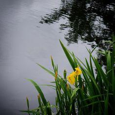 Strandmølledammen i Assens #visitfyn #fyn #nature #nature_perfection #naturelovers #mothernature #natur #denmark #danmark #dänemark #landscape #assensnatur #assens #mitassens #vildmedfyn #fynerfin #vielskernaturen #visitassens #instapic #picoftheday #spring #forår