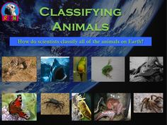 Classification of Animals: Invertebrates and Vertebrates (mammals, fish, birds, reptiles, and amphibians). This 36 page Powerpoint presentation covers all of those animals and much more. More than just a series of informative slides, this educational package contains higher level thinking activities, riddles, and diagrams to keep the students engaged.  Ryan Nygren (photo attribution - http://www.flickr.com/photos/bethscupham/
