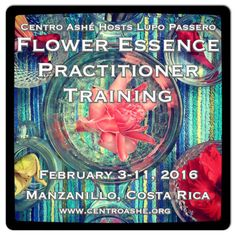 Flower Essence Practitioner Training February 3-11, 2016 (8 nights) Guest teacher Lupo Passero 45 hours in Costa Rica - Only 11 spots available!!! www.centroashe.org  Centro Ashé is honored to host Flower Essence Practitioner and Community Herbalist Lupo Passero of Twin Star Herbs & Education for our first ever Flower Essence Practitioner Training.  Join us in the abundant Talamanca region of Costa Rica for this in depth immersion into flower essences.