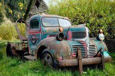 Dodge tow truck. Junkyard beauties.