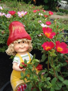 Portulaca Portulaca Flowers, Ice Plant, Christmas Ornaments, Holiday Decor, Plants, Animals, Lush, Nature, Colors