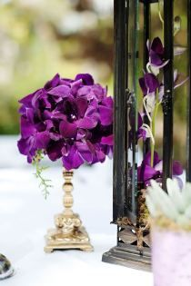 inspiration for plum colored gladiolus in tall water filled vase