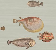 Whimsical fish wallpaper designed by Piero Fornasetti for Cole & Son in several fun colors and sizes. The famous Cole & Son puffer fish wallpaper. Cole And Son Wallpaper, How To Hang Wallpaper, Fish Wallpaper, Bathroom Wallpaper, Print Wallpaper, Pattern Wallpaper, Wallpaper Designs, Coastal Wallpaper, Vintage Wallpaper Patterns