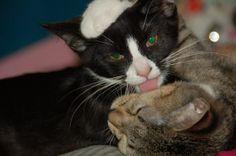 Kitty kisses.