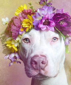 Dogs like flower crowns too http://www.refinery29.com/2014/09/74356/sophie-gamand-flower-power-dogs