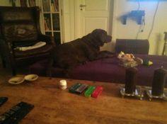 En tilfreds hund med sin egen sofa<3
