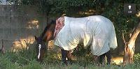 """""""O GRITO DO BICHO"""": Dono do cavalo 'agasalhado' diz que decidiu proteg..."""