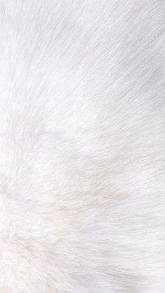 White fur iPhone wallpaper