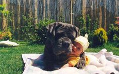 Awesome Mastiff Dog cuddling the Cute Baby. The Best Hug ever!