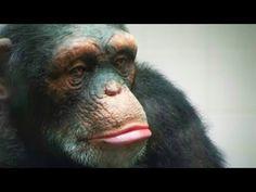 Urge McDonald's to Drop Cruel Chimpanzee Ad | Action Alerts | Actions | PETA