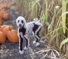 Cute Little Animals, Cute Funny Animals, Funny Dogs, Cute Animal Videos, Funny Animal Pictures, Cute Baby Dogs, Cute Puppies, Dog Halloween Costumes, Halloween Halloween