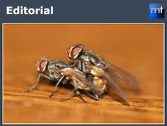 Editorial:  Seis moscas seis  - Mundotoro.com