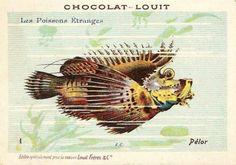 Chocolat Louit