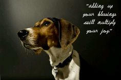 yes Hunting Art, Fox Hunting, Treeing Walker Coonhound, Jethro, Bloodhound, Hound Dog, Beagle, Pet Care, Equestrian